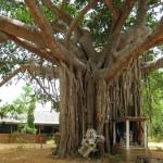 Отдых в Шри-Ланке, Коломбо